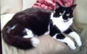 """""""Zora"""" our sweet kitty"""