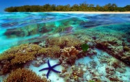 The famous Great Barrier Reef