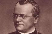 Gregor Mendel desription