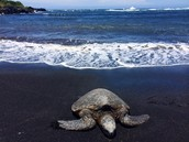 Turtles should be left alone that are along the beach