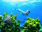 A Coral Reef that is healthy