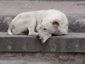 Animal Abandonment