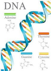 What is DNA.