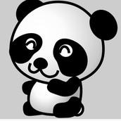 Paris the panda