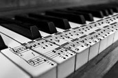 Musician/ Composer