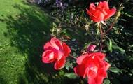 ElmAgos garden