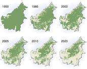 Deforestacíon