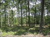 WEB IMAGE: (Missouri Forest)