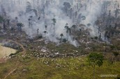 Aftermath of forest fire in the amazon