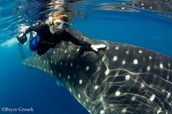 Wow! Here she is touching a whale shark.