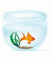 The Fish Bowl Auction is coming!