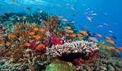 How many animals live in or on coral reefs?