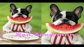 Funny dogs playing [NEW HD] - dogs playing compilation
