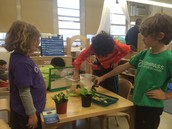 Exploring living systems: Bill the hermit crab, our new ant farm, the human body model, and plants