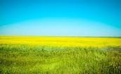 Prairie Info