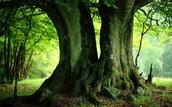 Šta je potrebno poneti za šetnju u šumi?