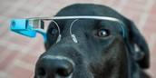 Animals Wear Google Glass