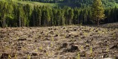 Deforestation can affect anywhere because it affects then enviroment.