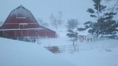 A blizzard had rolled into this farm and had because of its unexpected visit had sadly killed a lot of his life stock