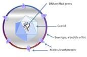 Virus Shape: Spherical
