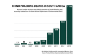 Rhino poaching deaths in South Africa