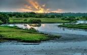 largest wetland!