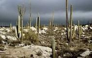 Rainy Desert