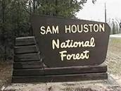 Sam Houston national forest