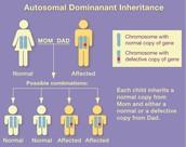 offspring inheritents