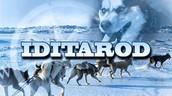The Alaskan Race will begin on Saturday, March 5th.