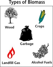 5 Facts about Biomass!!!