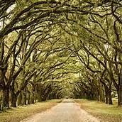 Gergia trees