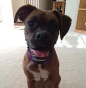 My dog Macie!