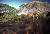 Less vegetation