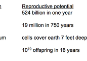 In every generation, more offspring are produced than can survive