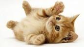 Playful!
