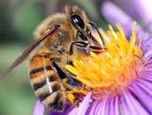 10 interesting facts about bees