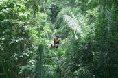 Izpanpajul Natural Parque: Zipline
