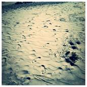 I really love the beach!