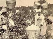Enslave African American