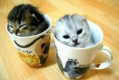 Two Twins in a Tea Cup