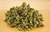 This Is What Marijuana Looks Like