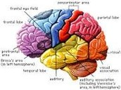 Experience the interesting facts about your brain!!!