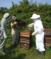 Beekeeping Coaching
