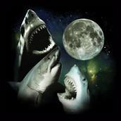 Three shark moon.