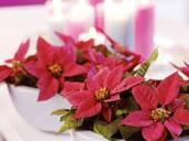 de roze Kerstster