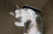 My Cat, Cleopatra