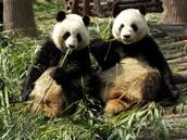 Protegerán las especies en peligro de extinción