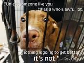 abusive animals