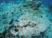 The distruction of coral reefs